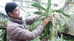 Thái Bình: Làng trồng phong lan rừng chơi chơi mà thu tiền thật, vườn lan trông như củi khô mà giá nửa tỷ đồng
