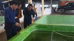Thái Bình: Hội nông dân phát huy vai trò cầu nối, giúp nông dân làm giàu