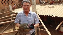 Nuôi chim trĩ quý hiếm, một ông nông dân tỉnh Lâm Đồng năm nào cũng trúng vài trăm triệu