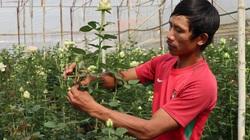 Tiêu thụ hoa khó khăn, Sở Giao thông Lâm Đồng đề nghị không tăng giá cước vận tải