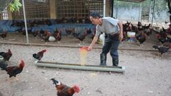 Giá gia cầm hôm nay 4/2 (23 tháng Chạp): Giá gà, vịt tại các miền biến động