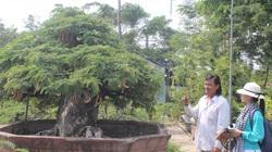 Long An: Chơi cây kiểng độc lạ, hình thù kỳ dị mà hái ra tiền tỷ