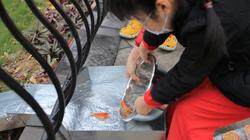 Người Hà Nội thích thú thả cá chép qua máng trượt tiễn ông Công ông Táo về trời