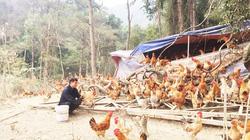 Vĩnh Phúc: Lùng sục mua con đặc sản từ gà có râu, dê núi tới thịt hươu về ăn Tết