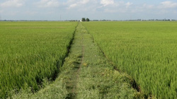 An Giang: Chuyển hơn 70 ha đất trồng lúa sang phi nông nghiệp