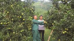 Hà Giang: Xuất hiện nhiều mô hình làm giàu trong nông nghiệp, thêm nhiều tỷ phủ nông dân