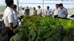 Có loại tổ yến ngon nhất thế giới, có thứ sâm quý, Quảng Nam xác định nông nghiệp là thế mạnh