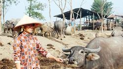 """Đồng Nai: Buồn vui nghề nuôi trâu đàn cả trăm con béo mập, kiêm """"cò đất"""" kiếm vài chục triệu"""
