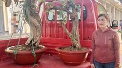 Tây Ninh: Công an trao trả những cây kiểng quý bị mất trộm cho 9 hộ gia đình