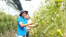 Sản xuất nông nghiệp theo đơn đặt hàng, doanh thu đạt hàng trăm triệu/năm