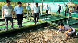 Trà Vinh: Nuôi lươn không bùn bắt lên hàng tấn, toàn con to bự, kéo vỉ ra ai nhìn thấy cũng bất ngờ