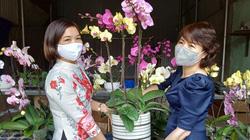 Sôi động thị trường hoa, cây cảnh dịp Tết ở Phù Yên