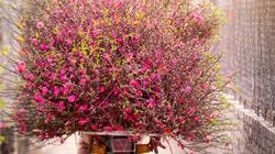 Không khí lạnh cộng hội tụ gió, Bắc Bộ mưa to, những người kinh doanh hoa cần lưu ý điều này