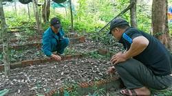 Phú Yên: Lan kim tuyến là loài cây thuốc gì, quý hiếm thế nào mà ở huyện này đang gấp rút bảo tồn, nhân giống?