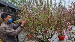 Điện Biên: Tết đến cận kề, nỗi lo của những tiểu thương bán hoa Tết