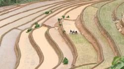 Chiềng Ân mở rộng diện tích khai hoang ruộng bậc thang