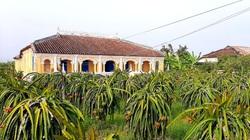 Long An: Xóm Nhà Giàu ở xứ trồng thanh long, nhà cổ, trong nhà cũng toàn đồ cổ, ai cũng trầm trồ