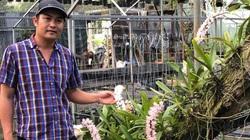 Vườn lan Khánh Nguyễn – Hoa lan rừng ngày càng được yêu thích và ưa chuộng