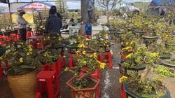 Gia Lai: 29 Tết mới bán được lèo tèo vài chậu hoa, nông dân ứa nước mắt vì cả núi chi phí