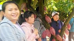 """Loài cây từng bị hắt hủi chặt bỏ, nay làm rạng danh chocolate hữu cơ """"Made in Bà Rịa - Vũng Tàu"""""""