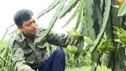 Phú Thọ: Bôn ba đủ thứ nghề vẫn tay trắng, về trồng cây cho quả ruột đỏ lại khấm khá nhất vùng