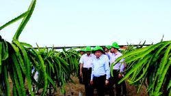 4 năm thực hiện Nghị quyết 120 về phát triển bền vững vùng ĐBSCL: Trục sản xuất mới ở đất 9 rồng