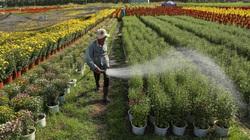 Cán bộ, công chức về hưu có được mua đất nông nghiệp?