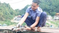 Hòa Bình: Nuôi cá lồng trên lòng hồ sông Đà, toàn cá đặc sản, một ông nông dân lãi hàng trăm triệu đồng/năm