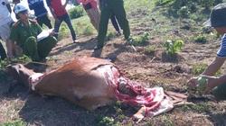 Phú Yên: Cảnh báo nạn trộm đập đầu bò, xẻ thịt tại chỗ