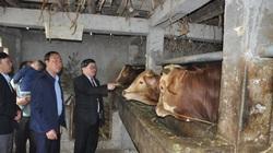 """Chủ tịch Hội Nông dân Việt Nam ấn tượng với phong trào """"người cõng cỏ, bò cõng người"""" ở huyện nhiều đá nhất cả nước"""