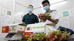 Trung Quốc đột nhiên mua nhiều trái cây của Việt Nam, loại quả nào được mua nhiều nhất?