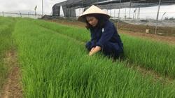 Nghệ An: Liều trồng giống lúa lạ chỉ có bên Tây, làm ra thứ mì cũng lạ, chị nông dân xinh đẹp có chục tỷ