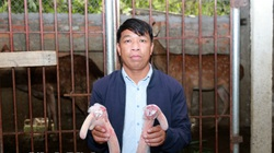 """Ninh Bình: """"Con đại bổ"""" là con gì mà nông dân Cúc Phương nuôi tới mùa này khách thập phương về hưởng lộc?"""