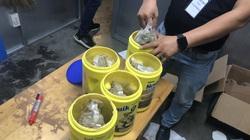 Bắt giữ gần 6kg thảo mộc nghi ma túy từ Mỹ về Việt Nam theo dạng quà tặng, quà biếu
