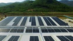 Triển khai năng lượng mặt trời đến 12 trang trại bò sữa 4.0 của Vinamilk