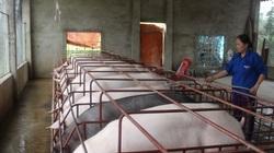 Hà Nội: Hơn 400 mô hình nông dân bảo vệ môi trường