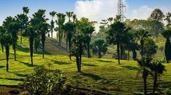 Trồng cây cọ dọc cao tốc Hà Nội – Lào Cai, Phú Thọ cần đáp ứng những yêu cầu gì?