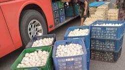 Giá gia cầm hôm nay 16/3: Cập nhật giá gà, vịt mới nhất, giá trứng gà Ai Cập chỉ 1.000 đồng/quả