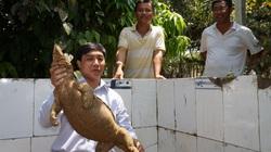 """Quảng Nam: Nông dân nuôi những con bò lai """"to đùng"""", con bò sát nhìn ghê ghê này nhưng thu nhập khiến ai cũng mê"""