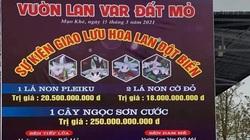 Chấn động: 250 tỷ đồng vụ giao dịch lan đột biến tại Quảng Ninh, giá trị thực hay chiêu trò thổi giá?