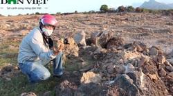 Bãi san hô cổ nghìn năm tuổi Karang ở Ninh Thuận bị tàn phá nặng nề bởi máy móc