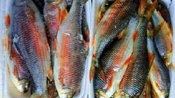 """Bình Định: Loài cá chỉ vượt thác để sinh sản, ăn cùng với loại rau tên nghe bắt tai, bán """"đắt như tôm tươi"""""""