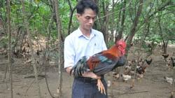 """Giá gia cầm hôm nay 18/3: Người nuôi gà lông màu """"thở phào"""" nhờ giá tăng, người nuôi vịt phấn khởi"""