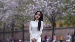 """Hà Nội: Hoa ban nở rộ, giới trẻ đua nhau """"khoe sắc"""" trên phố Bắc Sơn, Hoàng Diệu"""