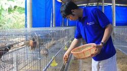 Khởi nghiệp thành công nhờ mạnh dạn bỏ phố về quê nuôi chim, trồng nấm