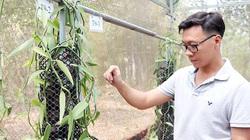 Hot boy trồng hoa lan không phải lan đột biến nhưng vẫn quý lại thơm điếc mũi, đặc biệt chỉ nở 1 ngày trong năm