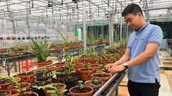 Đắk Lắk: Nhà có hoa lan giả hạc đột biến quý hiếm nên chàng nông dân có bằng đại học phải làm điều này