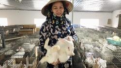 Thái Bình: Nuôi loài tai dài, lông trắng muốt có nguồn gốc từ Mỹ, nữ nông dân lãi 500 triệu đồng/năm