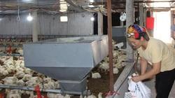 Giá gia cầm hôm nay 20/3: Sốc với giá gà công nghiệp giảm chỉ còn 20.000 đồng/kg rẻ như cho, vịt hơi 40.000 đồng/kg