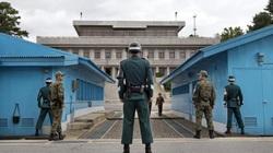 Hàn - Triều suýt tương tàn lần 2 vì.... cắt tỉa cây bạch dương